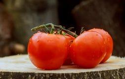 Tomates humides sur la vigne Baisses avec une belle réflexion Foyer sur les baisses Images libres de droits