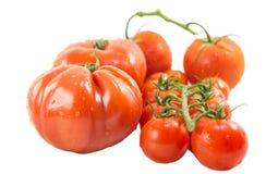 Tomates III Imagen de archivo libre de regalías