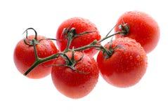 Tomates isolados Foto de Stock