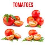 Tomates isolados Imagens de Stock Royalty Free