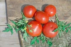 Tomates jaunes récemment récoltées Image stock