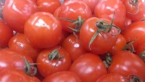 Tomates jugosos y maduros Imagen de archivo