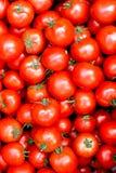 Tomates juteuses rouges mûres Images libres de droits