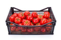 Tomates (lycopersicum de la solanácea) en cajón plástico fotografía de archivo libre de regalías