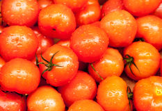 Tomates mûres au marché humide avec la pluie Image stock