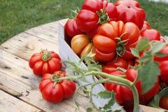 Tomates mûres dans une boîte en bois dans le jardin image stock