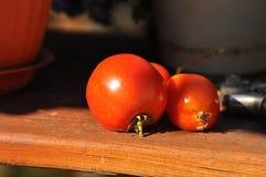 Tomates mûres fraîches Image libre de droits