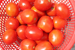 Tomates mûres dans le panier Photographie stock libre de droits