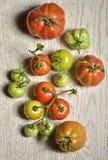 Tomates mûres et non mûres Image stock