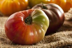 Tomates mûres organiques fraîches d'héritage Image libre de droits