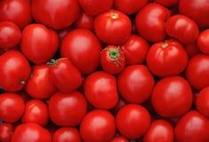 Tomates mûres rouges comme fond Photos libres de droits