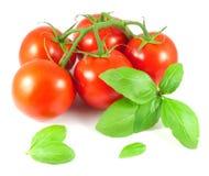 Tomates maduros con las hojas de la albahaca Imagenes de archivo