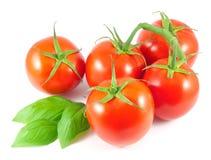 Tomates maduros con las hojas de la albahaca Fotos de archivo libres de regalías