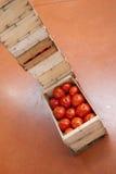 Tomates maduros deliciosos Imagens de Stock