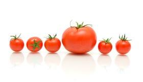 Tomates maduros em um fundo branco com reflexão Fotos de Stock Royalty Free