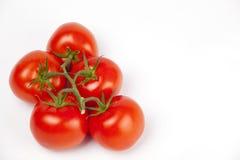 Tomates maduros em um ramo no branco Imagens de Stock
