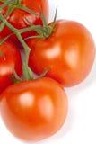 Tomates maduros em um ramo no branco Imagem de Stock Royalty Free