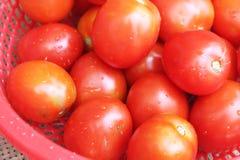 Tomates maduros en cesta Fotos de archivo libres de regalías