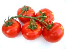 Tomates maduros en vid Fotos de archivo