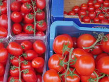 Tomates maduros frescos Fotos de archivo