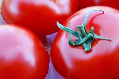 Tomates maduros frescos Foto de Stock