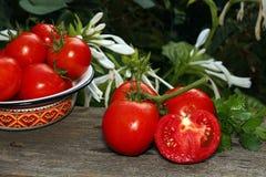 Tomates maduros frescos Fotos de archivo libres de regalías