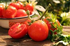 Tomates maduros frescos Fotografía de archivo libre de regalías