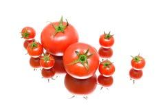 Tomates maduros frescos en un fondo blanco con la reflexión Foto de archivo libre de regalías