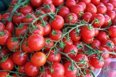 Tomates maduros na videira fotos de stock royalty free