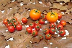 Tomates maduros que encontram-se nas folhas de outono fotos de stock royalty free