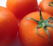 Tomates maduros regordetes foto de archivo
