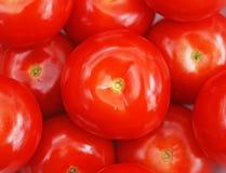 Tomates maduros rojos Fotografía de archivo