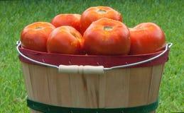 Tomates maduros rojos en cesta Foto de archivo