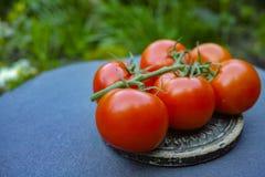 Tomates maduros rojos frescos Imagen de archivo libre de regalías