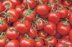 Tomates maduros rojos grandes frescos sanos orgánicos en el mercado en el sol Imagen de archivo libre de regalías