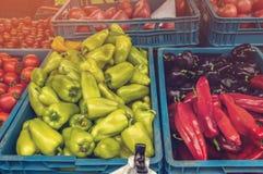Tomates maduros vermelhos e pimentas coloridas a vender no mercado dos fazendeiros do dia do outono na caixa plástica azul com ou Imagens de Stock Royalty Free