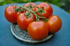 Tomates maduros vermelhos frescos Imagem de Stock
