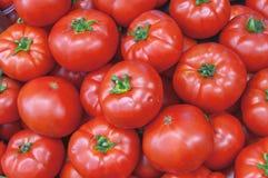 Tomates maduros vermelhos grandes frescos saudáveis orgânicos no mercado no sol Imagens de Stock