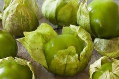 Tomates mexicaines vertes avec la peau Photo libre de droits