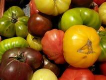 Tomates misturados Foto de Stock Royalty Free