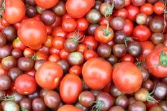 Tomates multicolores, el mercado de los granjeros Imágenes de archivo libres de regalías