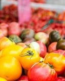 Tomates multicoloridos Foto de Stock Royalty Free
