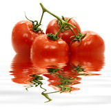 Tomates na água. Fotos de Stock Royalty Free