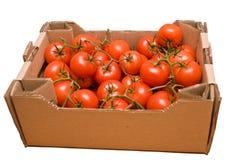 Tomates na caixa Fotos de Stock