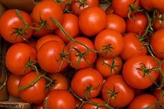 Tomates na caixa Imagem de Stock
