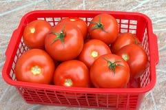 Tomates na cesta Foto de Stock Royalty Free