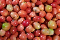 Tomates na loja imagem de stock