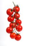 Tomates na videira Fotografia de Stock
