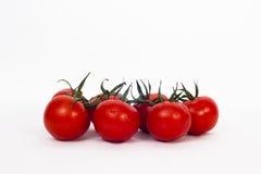 Tomates na videira Imagem de Stock