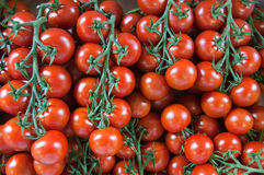 Tomates na videira Fotos de Stock Royalty Free